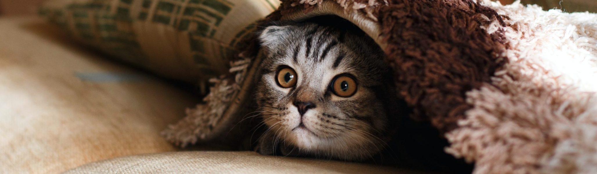 cat-unsplashed